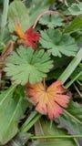 Vert et orange Image libre de droits
