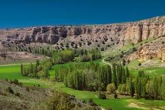 Vert et roches en nature Images libres de droits