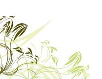 Vert floral avec le backgr blanc Photo stock
