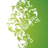vert floral de fond Photo stock