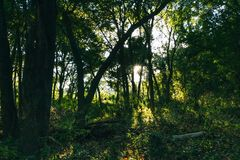 Vert-foncé Image libre de droits