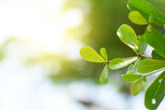 Vert frais de feuilles avec la lumière molle photographie stock libre de droits