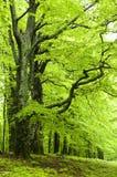 Vert frais de source Image libre de droits