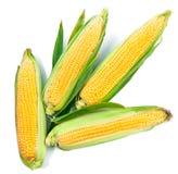 Vert frais de vue supérieure de légumes de récolte de maïs photographie stock