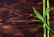 vert frais en bambou Images stock