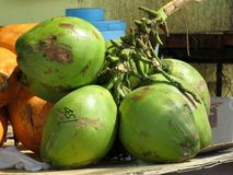 Vert, frais, noix de coco sur la plage Photographie stock libre de droits
