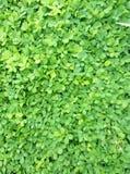 Vert gentil Photographie stock libre de droits