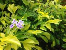Vert isolé de fleur Photo libre de droits