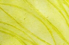 Vert jaune Photo libre de droits