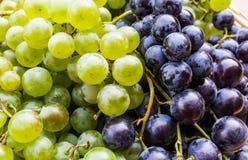 vert noir de raisins Photos stock