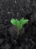 Vert nouveau-né de fleur Image libre de droits