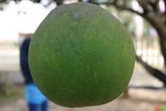 Vert orange d'Indonésie photos libres de droits