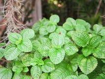Vert pendant la durée Photos stock