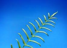Vert pour la terre Photographie stock libre de droits