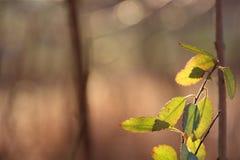 Vert résiduel photo stock