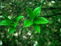 Vert sur le vert Image libre de droits