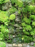 Vert sur le vert Photos stock