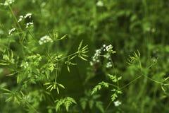 vert un ressort vert de fond Photographie stock libre de droits