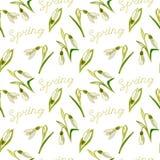 Vert, vecteur, ressort, nature, fleur, illustration, perce-neige, b illustration stock