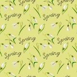 Vert, vecteur, ressort, nature, fleur, illustration, perce-neige, b illustration libre de droits
