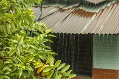 Vertakken de heldergroene bladeren zich op een boom tegen het dak van een baksteenhuis tijdens de regen stralen van water tijdens stock afbeelding