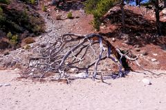 Vertakt oud hout op het strand stock afbeeldingen
