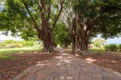 Vertakte bomen en een weg door hen, Trinidad, Sancti Spiritus, Cuba Exemplaarruimte voor tekst Stock Foto's