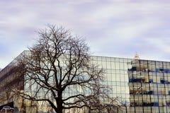 Vertakte boom in een stedelijk milieu stock afbeelding