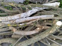 Vertakte boomtakken Royalty-vrije Stock Foto