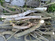 Vertakte boomtakken Royalty-vrije Stock Foto's