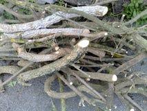 Vertakte boomtakken Stock Foto's