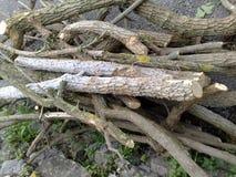Vertakte boomtakken Royalty-vrije Stock Afbeelding