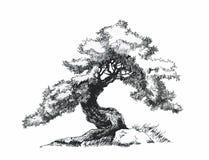 Vertakte vergankelijke boom De tekening van de bonsaiinkt royalty-vrije stock fotografie