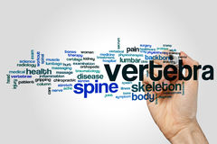 Vertebra word cloud. Concept on grey background stock photos