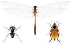 Vertegenwoordigers van insecten Stock Afbeeldingen