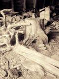 Vertente da madeira Foto de Stock Royalty Free