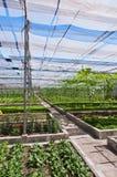 Vertente do vegetal Fotos de Stock
