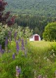 Vertente do vermelho e do branco e flores, Nova Scotia Imagem de Stock