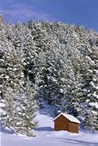 Vertente e pinhos nevado imagem de stock royalty free