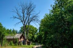 Vertente velha perto da árvore inoperante seca situada na vila imagem de stock royalty free