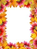 Verticaal bloemframe Stock Afbeelding