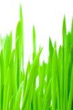 Verticaal groen gras Stock Foto's