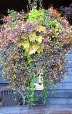 Verticaal-hangt het mandhoogtepunt van bloemen hangt vóór een oud houten hotel royalty-vrije stock afbeeldingen