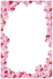 Verticaal kader van orchideeën Stock Fotografie