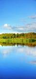 Verticaal panorama van moerasland Royalty-vrije Stock Afbeeldingen