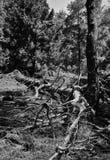 Verticaal zwart-wit levendig bos Royalty-vrije Stock Afbeeldingen