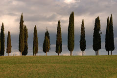 Vertical. Cypresses and landscape in the tuscany Royalty Free Stock Images