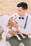 The vertical above portrait of the groom in vintage suit is petting the little dog and sitting on the white sofa in the. Sunny field Royalty Free Stock Photos