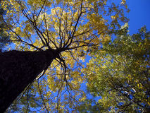 Vertical abstract. Of autumn trees Stock Photo