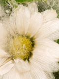 Vertical abstraction of daisy flower Royalty Free Stock Photo
